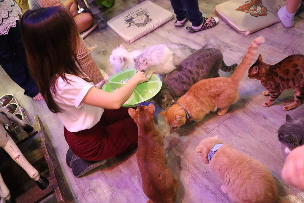 Caturday cat cafe (34)