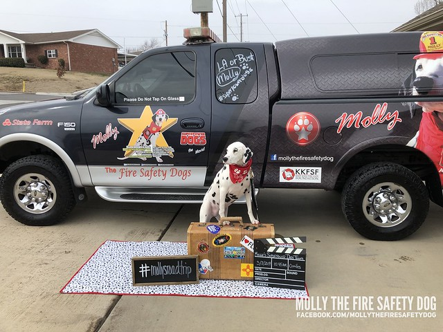 Molly's Superpower Dogs Tour: LA and San Diego