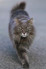 Patrol cat, coming at you!