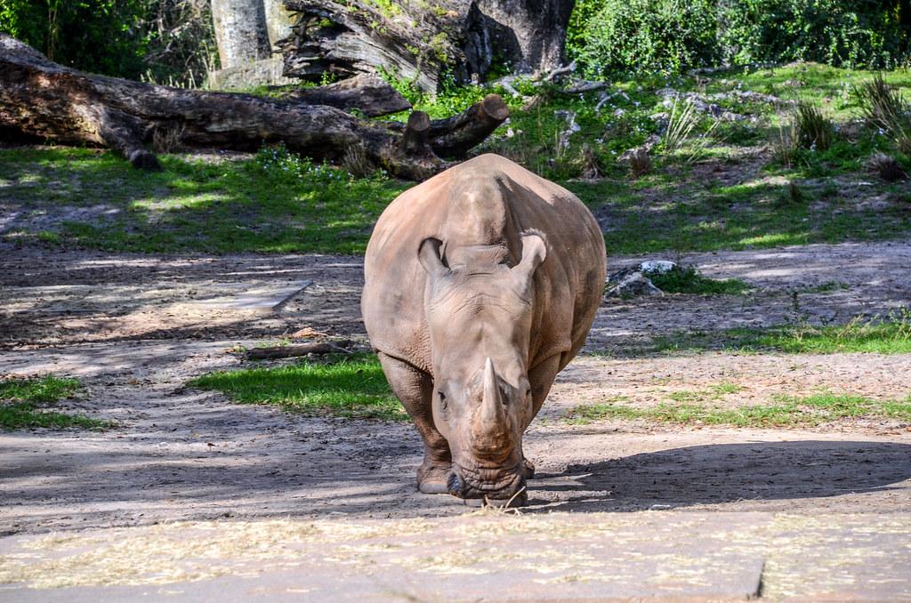 Rhino Safari AK