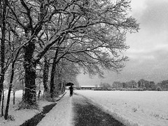 Alone in front of the white landscape