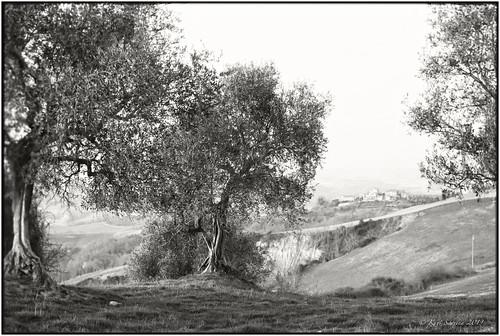 Reposting_Bella Toscana_Leica M4