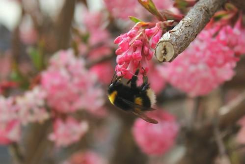 brins de printemps - Page 3 40403890923_05b9ed0fc7