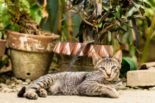 adobe alcala cc creativecloud d7200 lightroom nikon photoshop sigma30mmf14exdchsm vacation cat kitten streetphotography