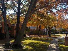 autumn dogwalk