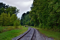 Train Tracks Leading off into a Distant Forest (Cuyahoga Valley National Park)