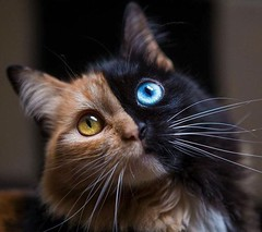 The most beautiful cat that you will see today...