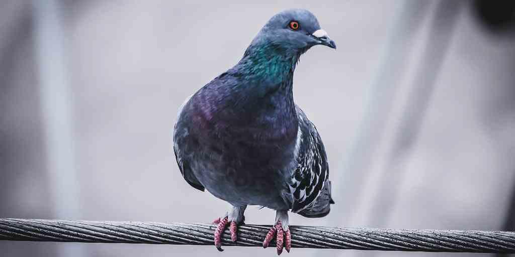 vole-robot-pigeon
