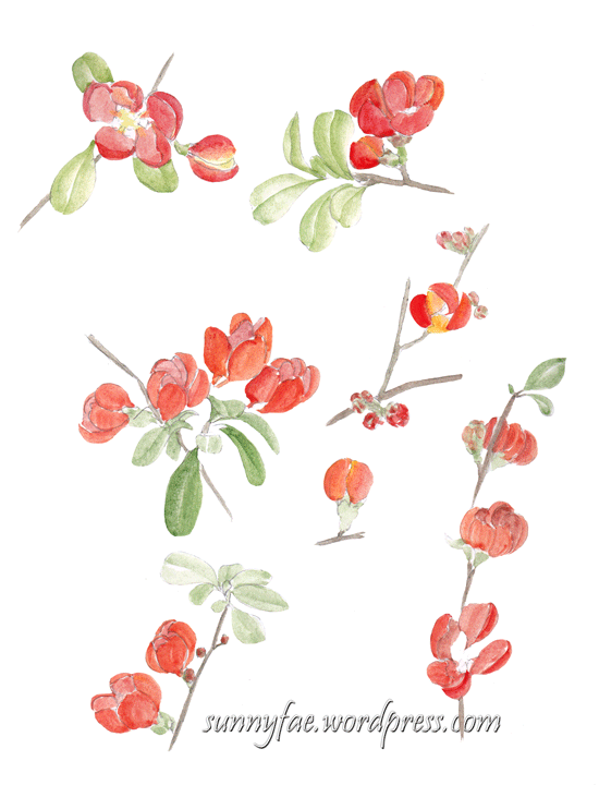orange quince garden sketch