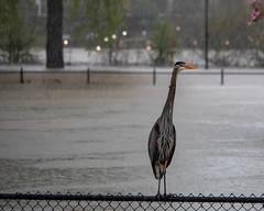 Flooded Eugene