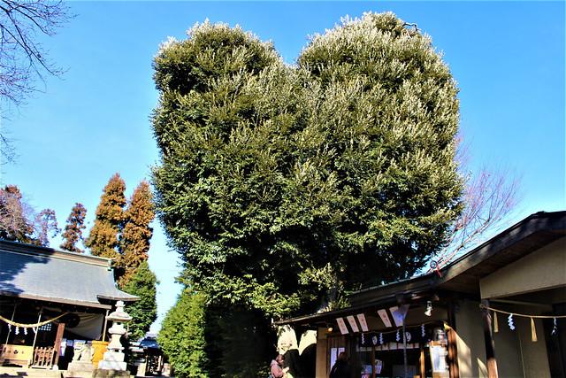 hirayanagihoshinomiyajinja021