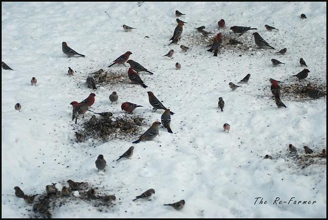 2019-02.birds.many