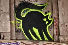 graffiti do gato