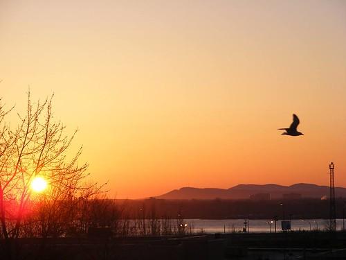 ** Le soleil levant...et l'oiseau...**