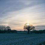 Winter Sonne  -  22. Januar 2019 - Hohenfichel - Schleswig-Holstein - Deutschland