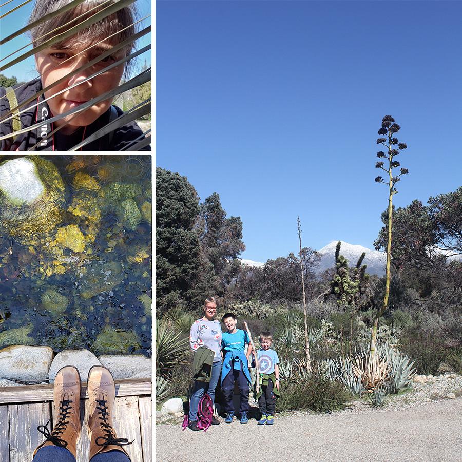 Rancho-Santa-Ana-Botanical-Gardens-Walk-1