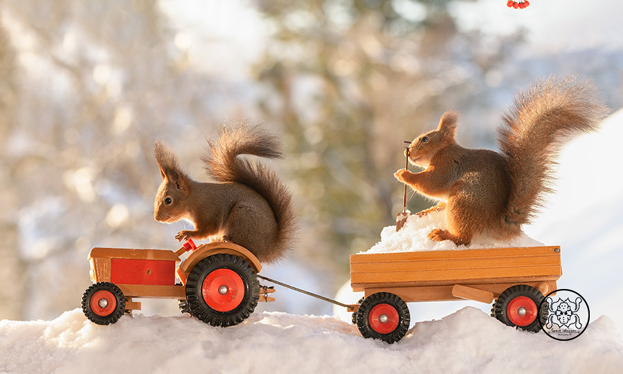 red squirrels standing  on a tractor with wagon