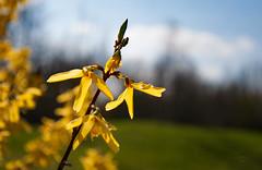 Floraisons printanières