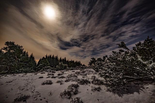 Winternacht im Menkepark