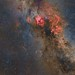 Cygnus by manuelj.g