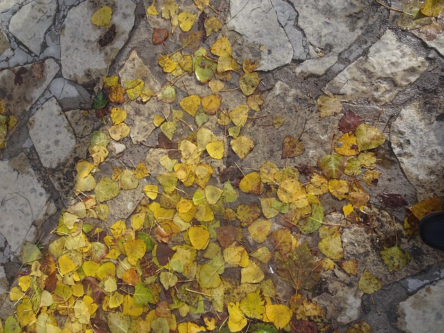 Hojas del pasado otoño