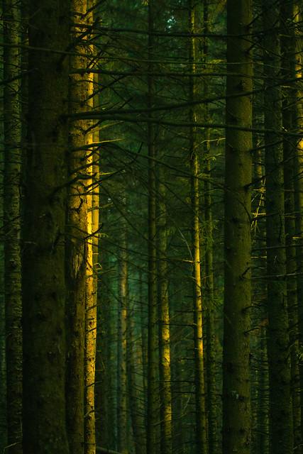 split tone forest