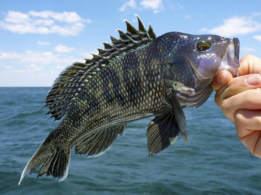 中外對話:全球變暖或重創中國東海漁業