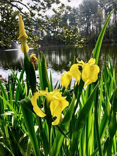 Aldridge Gardens, Birmingham (Hoover), Alabama