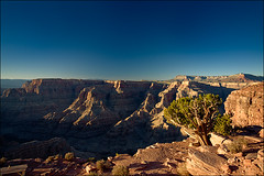 grand-canyon_dark_tree_01_8779967200_o