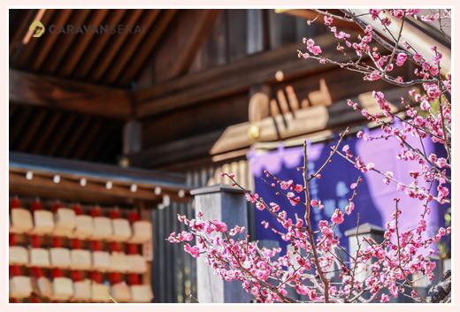 梅の花と八事塩竈神社 名古屋市天白区