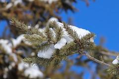 Snow Photos-16