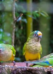 The Parque das Aves (Bird Park)_2