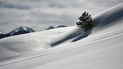 Nieve (Diamond dust)