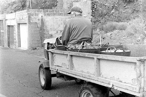 La cosecha de papas en El Pinar - El Hierro