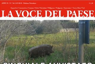 Noicattaro. copertina 7 front