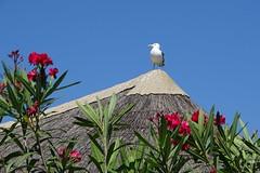 poste d'observation - Photo of Saint-Laurent-de-la-Salanque