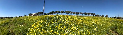 Silver Wing Super Bloom