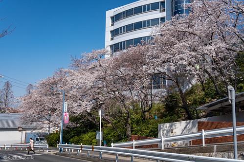 椙山女学園大学・星が丘キャンパス前
