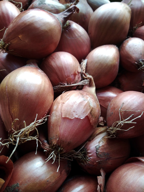 Shallots | Allium ascalonicum | Five ways to make people at the farmers' market hate you | Hedgefairy Tales https://hedgefairy.wordpress.com