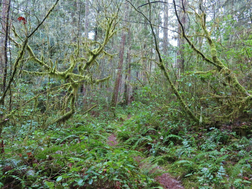 South Willamette Trail