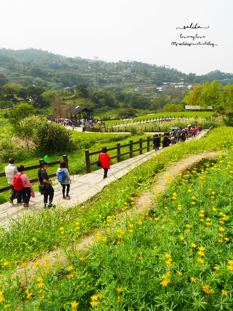 台北貓空樟樹步道樟湖步道怎麼去魯冰花海 (3)