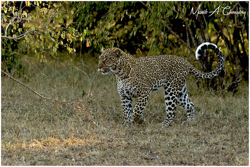 Queen Kaboso on the Prowl!