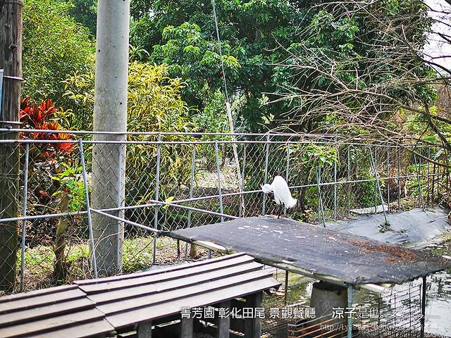 菁芳園 彰化田尾 景觀餐廳 9