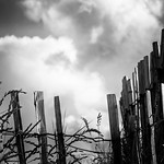 27. Juuli 2018 - 19:10 - fence & clouds