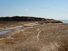 Great Island - dunes 1