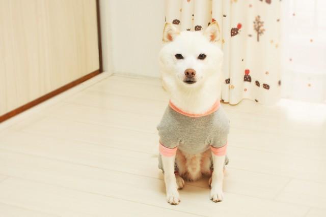 旅行中ペットOKのホテルに宿泊する犬