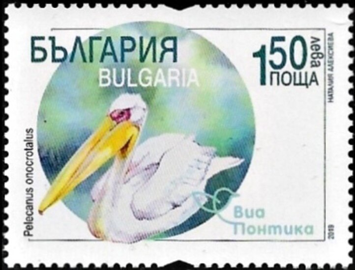 Bulgaria - Via Pontica Migratory Bird Route (February 1, 2019) Great White Pelican (Pelecanus onocrotalus)