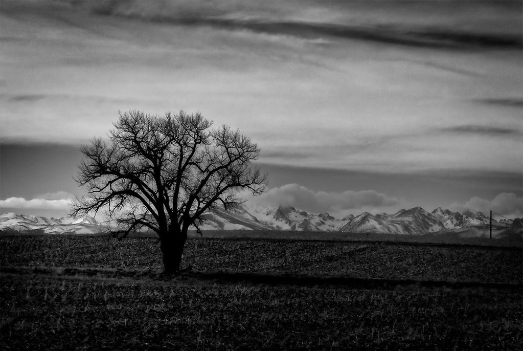 Landscape - Tree, Rocky Mountains near Erie Colorado