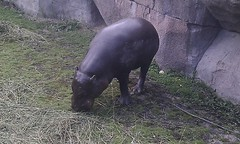 Parken Zoo 32