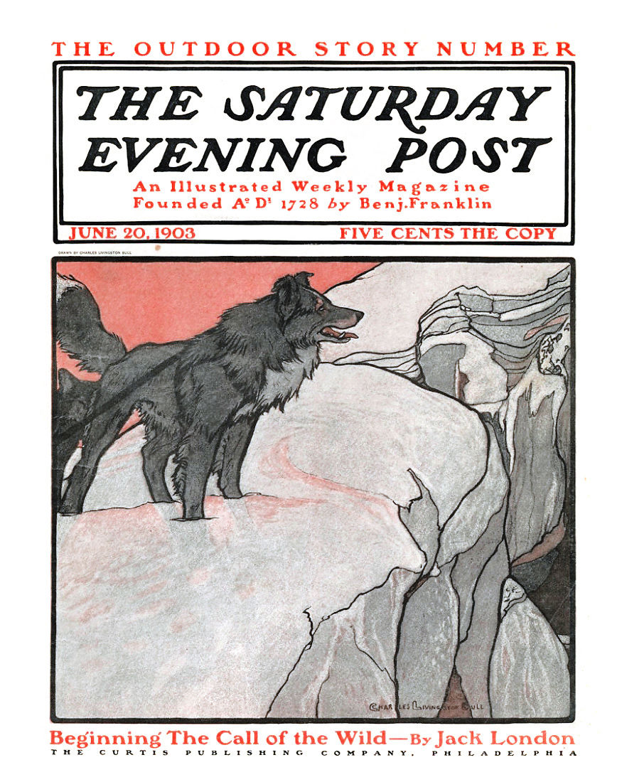 Cover of the Saturday Evening Post June 20, 1903, illustration by Charles Livingstone Bull, of The Call of the Wild by Jack London.